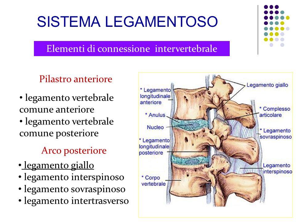 Elementi di connessione intervertebrale