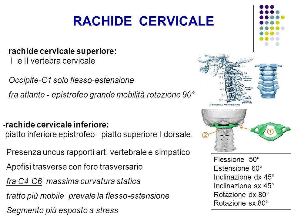 RACHIDE CERVICALE rachide cervicale superiore: