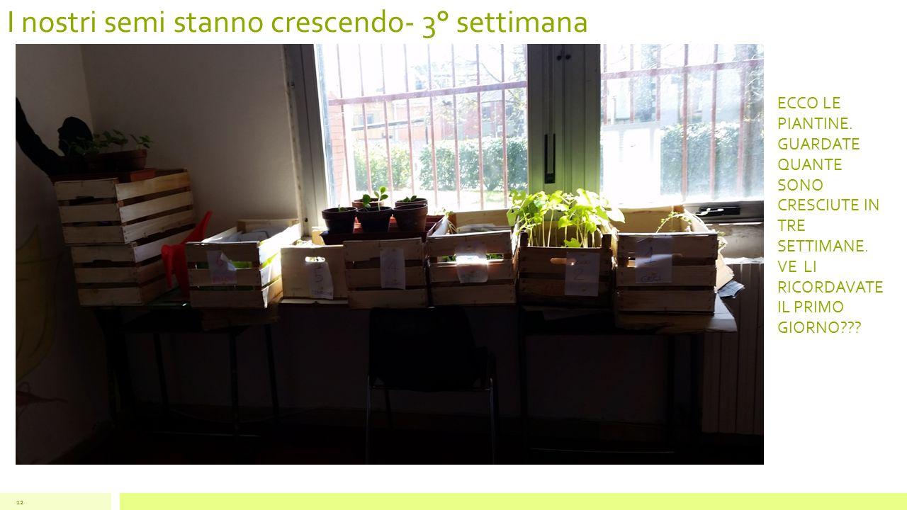 I nostri semi stanno crescendo- 3° settimana