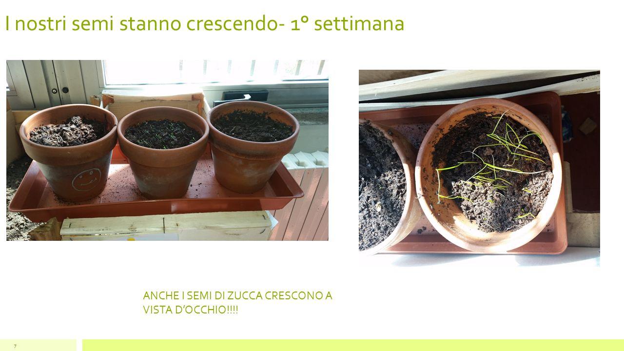 I nostri semi stanno crescendo- 1° settimana