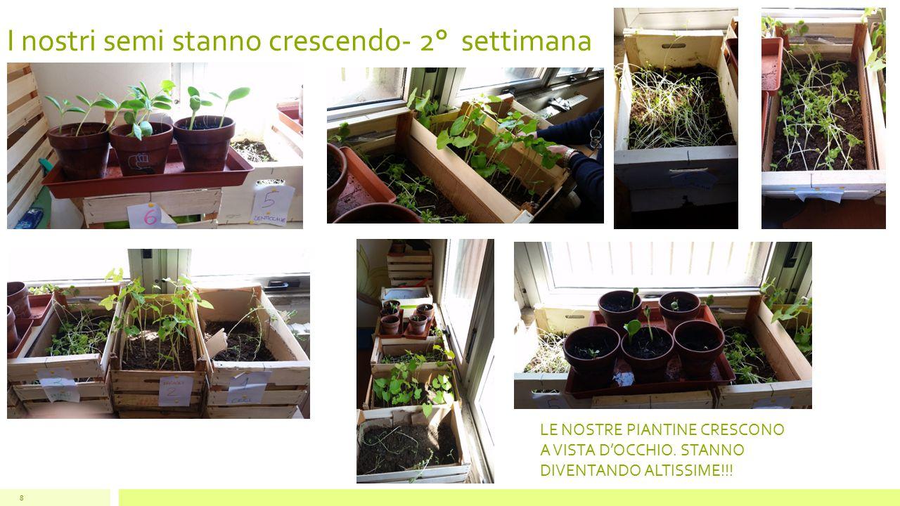 I nostri semi stanno crescendo- 2° settimana