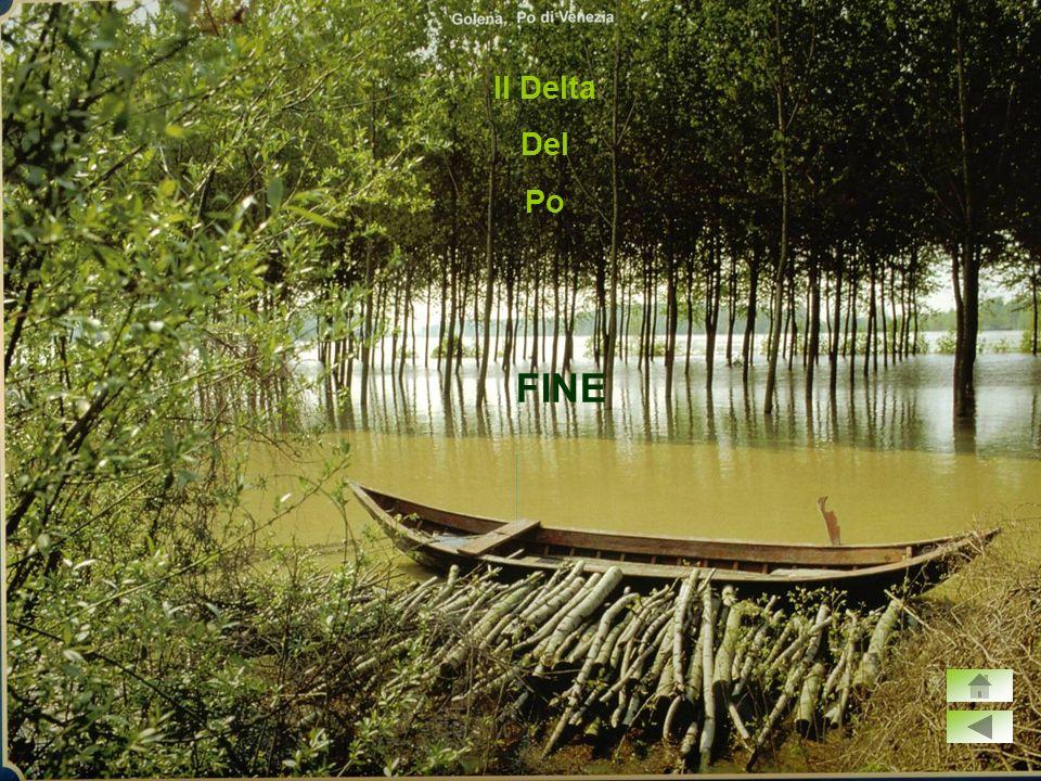 Il Delta Del Po FINE