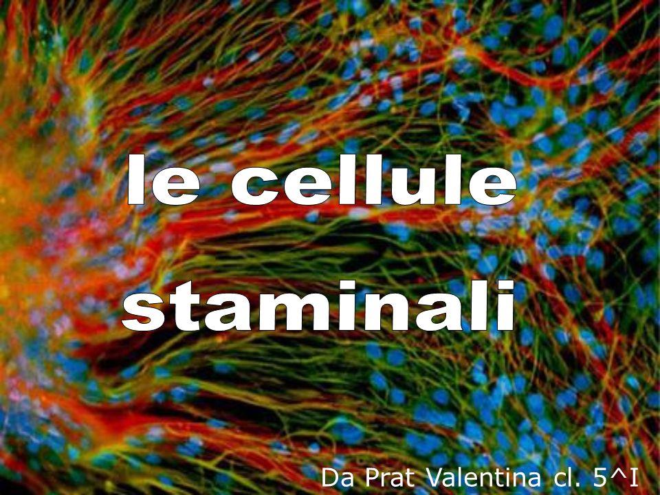 le cellule staminali Da Prat Valentina cl. 5^I