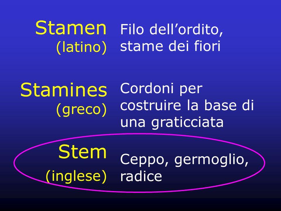 Stamen (latino) Stamines (greco) Stem (inglese)