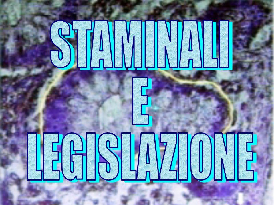 STAMINALI E LEGISLAZIONE