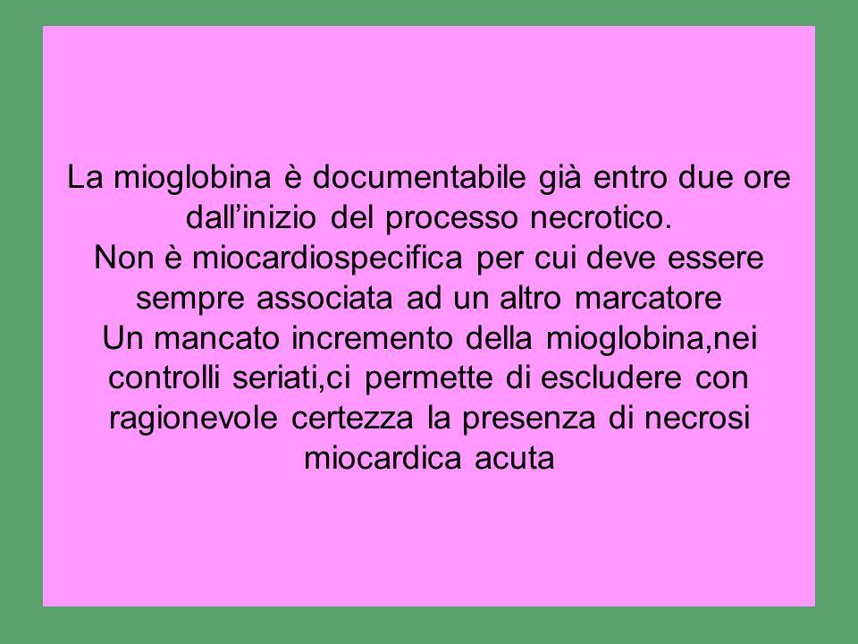 La mioglobina è documentabile già entro due ore dall'inizio del processo necrotico.
