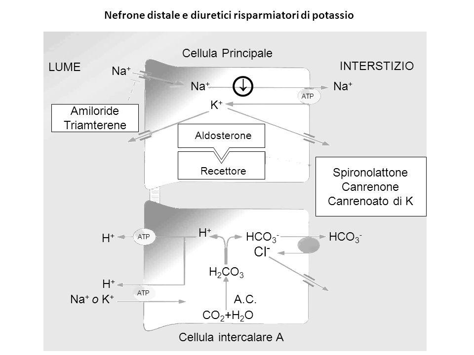 Nefrone distale e diuretici risparmiatori di potassio