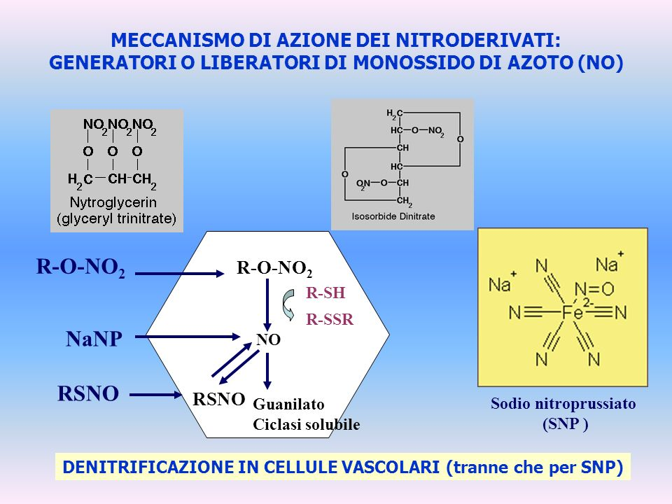 R-O-NO2 NaNP MECCANISMO DI AZIONE DEI NITRODERIVATI: