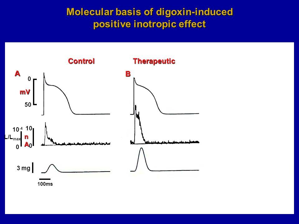 Molecular basis of digoxin-induced positive inotropic effect