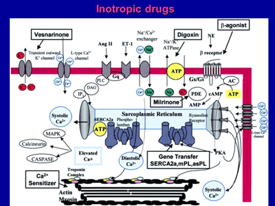 Inotropic drugs