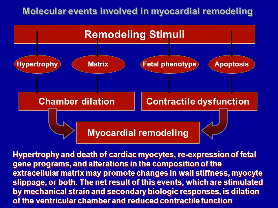 Contractile dysfunction Myocardial remodeling