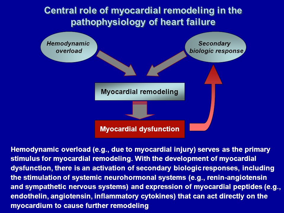 Myocardial remodeling Myocardial dysfunction