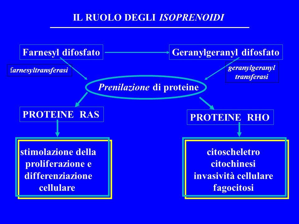 IL RUOLO DEGLI ISOPRENOIDI Prenilazione di proteine