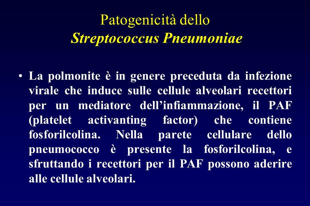 Patogenicità dello Streptococcus Pneumoniae