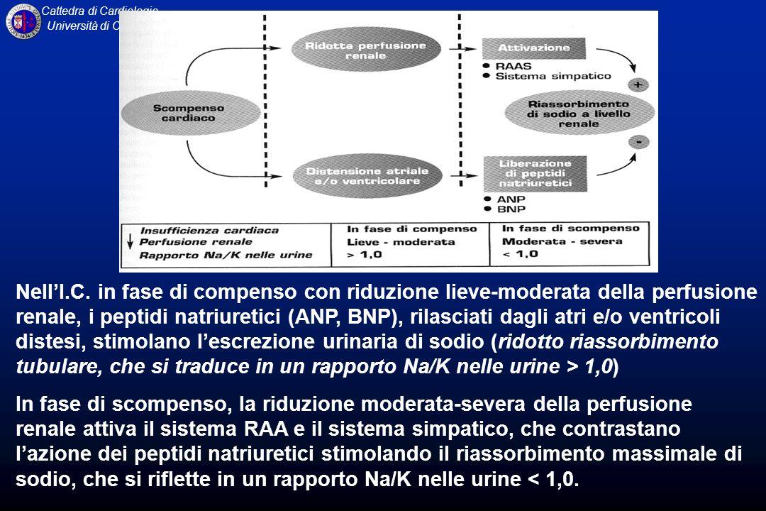Nell'I.C. in fase di compenso con riduzione lieve-moderata della perfusione renale, i peptidi natriuretici (ANP, BNP), rilasciati dagli atri e/o ventricoli distesi, stimolano l'escrezione urinaria di sodio (ridotto riassorbimento tubulare, che si traduce in un rapporto Na/K nelle urine > 1,0)