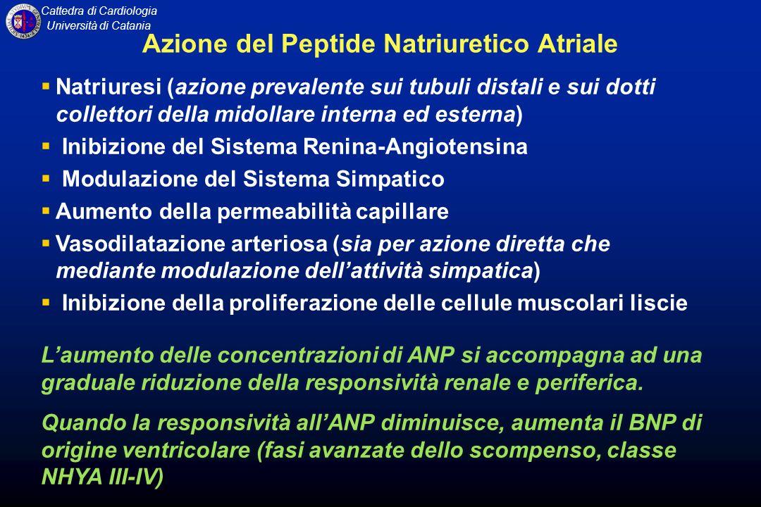 Azione del Peptide Natriuretico Atriale