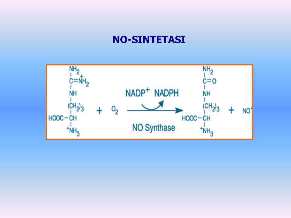 NO-SINTETASI