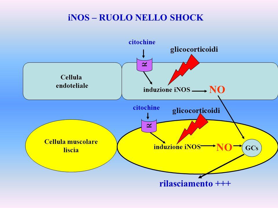 iNOS – RUOLO NELLO SHOCK
