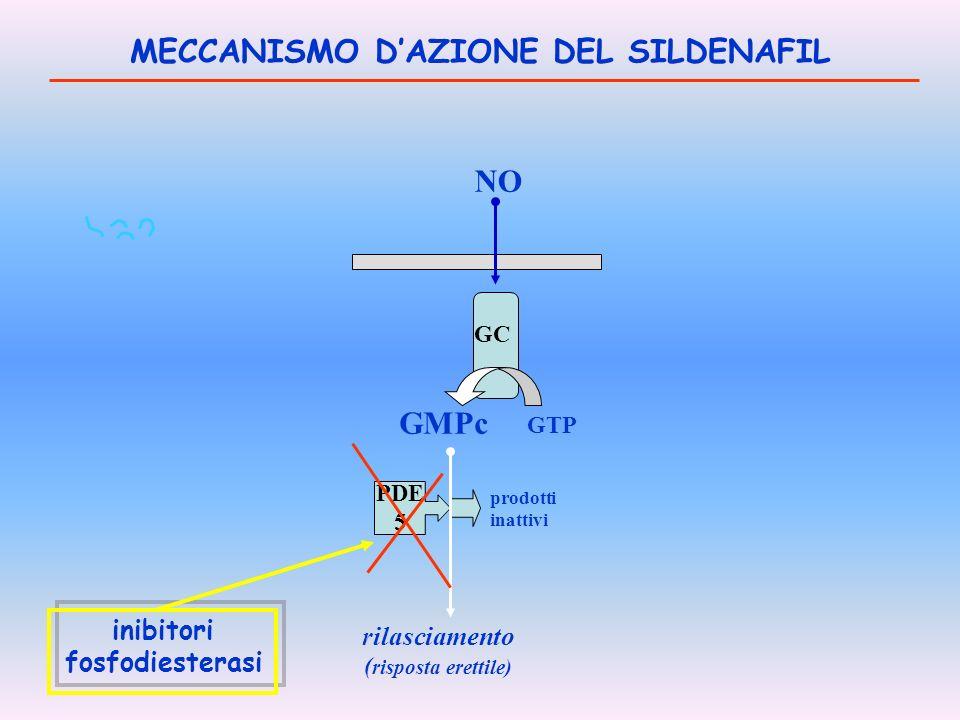 MECCANISMO D'AZIONE DEL SILDENAFIL