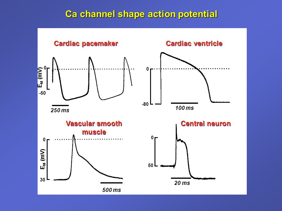 Ca channel shape action potential