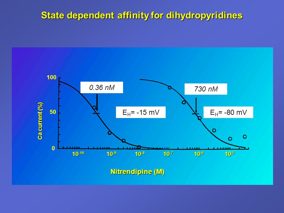 State dependent affinity for dihydropyridines