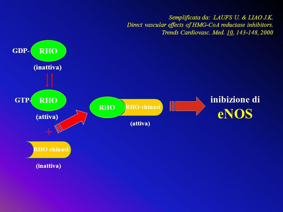 eNOS + inibizione di RHO RHO GDP- (inattiva) GTP- RHO (attiva)