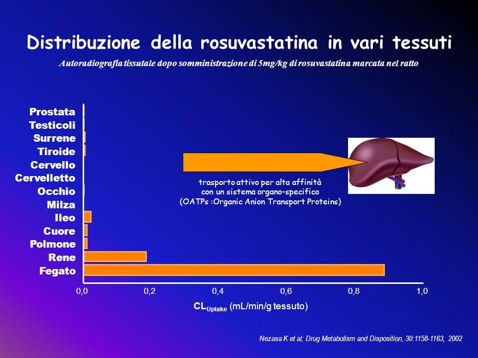 Distribuzione della rosuvastatina in vari tessuti