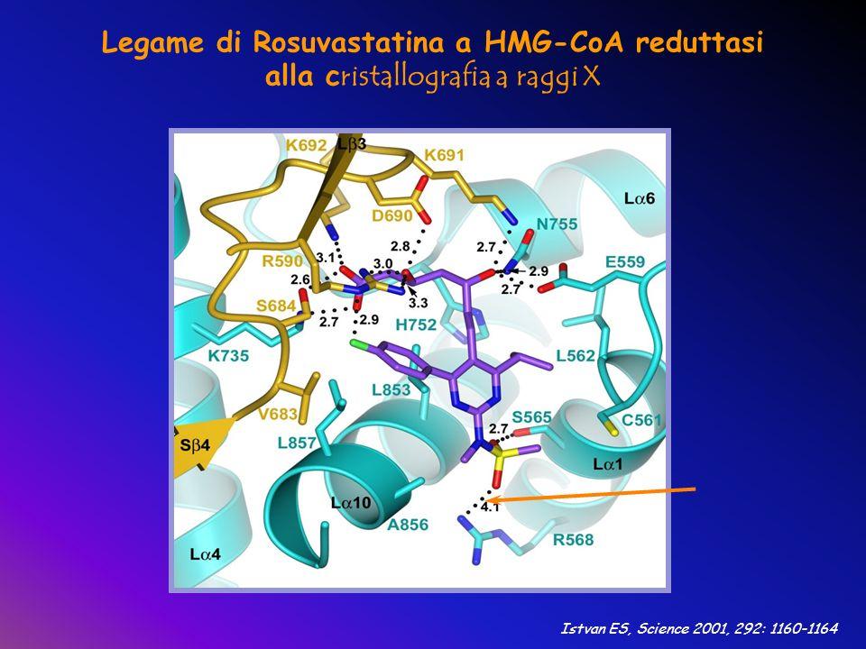 Legame di Rosuvastatina a HMG-CoA reduttasi