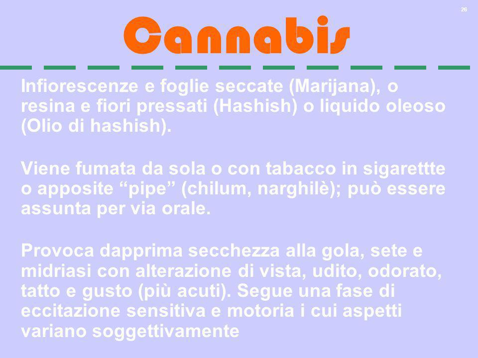 Cannabis Infiorescenze e foglie seccate (Marijana), o resina e fiori pressati (Hashish) o liquido oleoso (Olio di hashish).