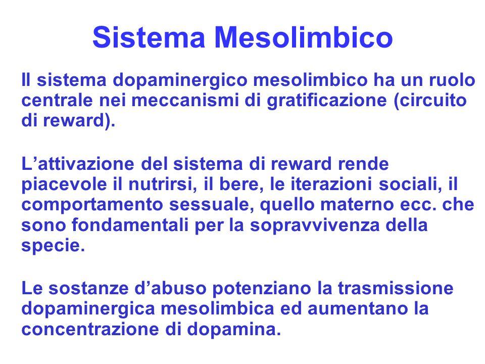 Sistema Mesolimbico Il sistema dopaminergico mesolimbico ha un ruolo centrale nei meccanismi di gratificazione (circuito di reward).