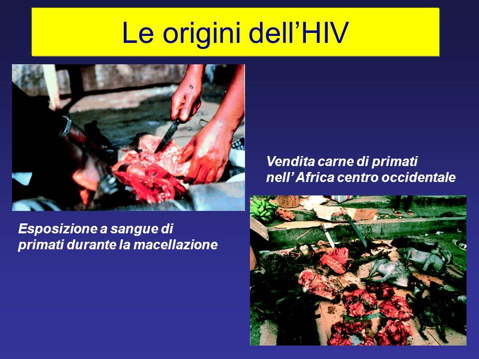 Le origini dell'HIV Vendita carne di primati