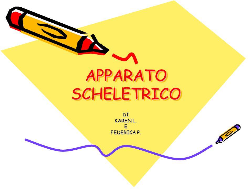 APPARATO SCHELETRICO DI KAREN L. E FEDERICA P.
