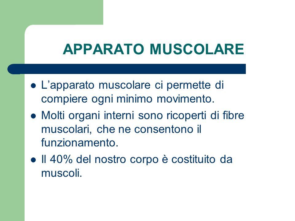 APPARATO MUSCOLARE L'apparato muscolare ci permette di compiere ogni minimo movimento.