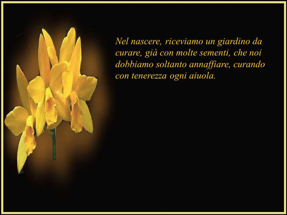 Nel nascere, riceviamo un giardino da curare, già con molte sementi, che noi dobbiamo soltanto annaffiare, curando con tenerezza ogni aiuola.