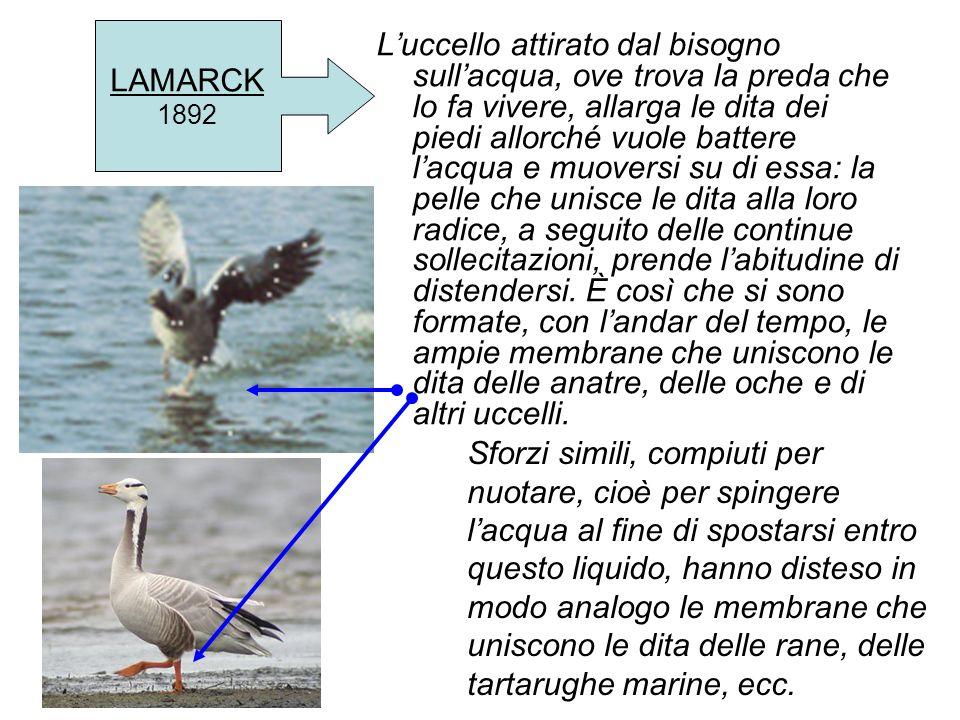 LAMARCK 1892.