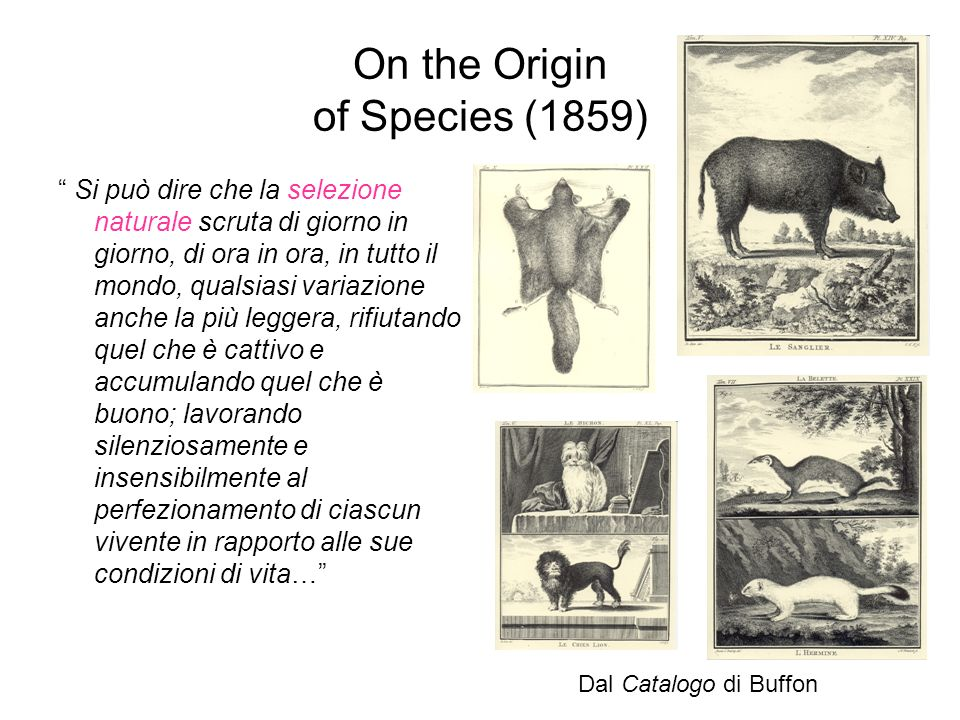 On the Origin of Species (1859)