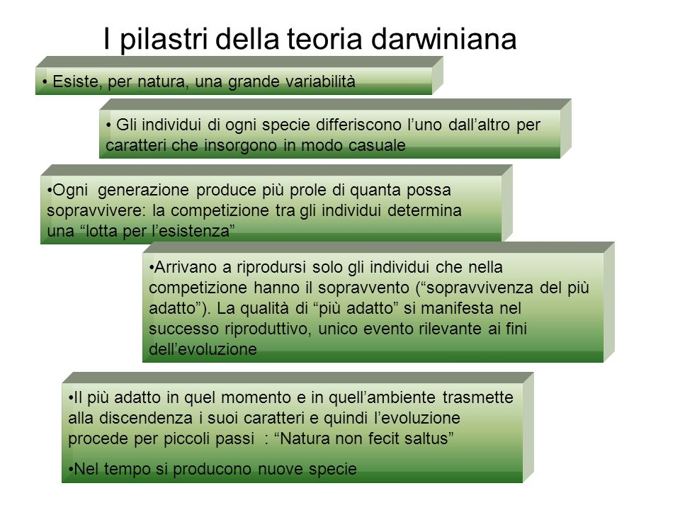 I pilastri della teoria darwiniana