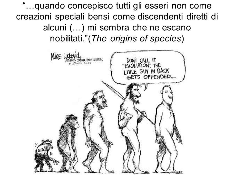 …quando concepisco tutti gli esseri non come creazioni speciali bensì come discendenti diretti di alcuni (…) mi sembra che ne escano nobilitati. (The origins of species)