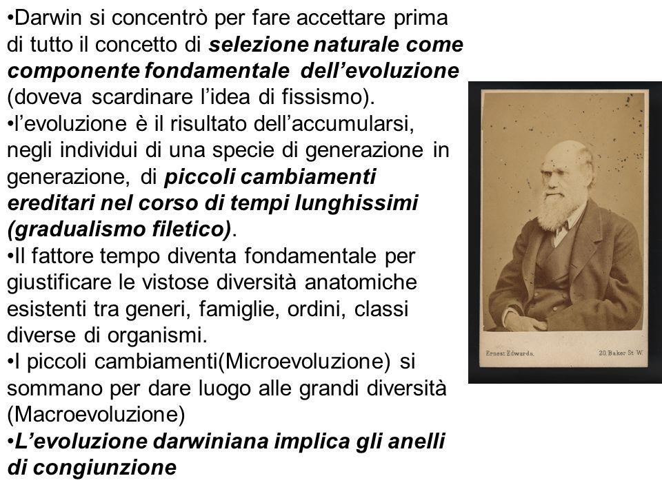 Darwin si concentrò per fare accettare prima di tutto il concetto di selezione naturale come componente fondamentale dell'evoluzione (doveva scardinare l'idea di fissismo).