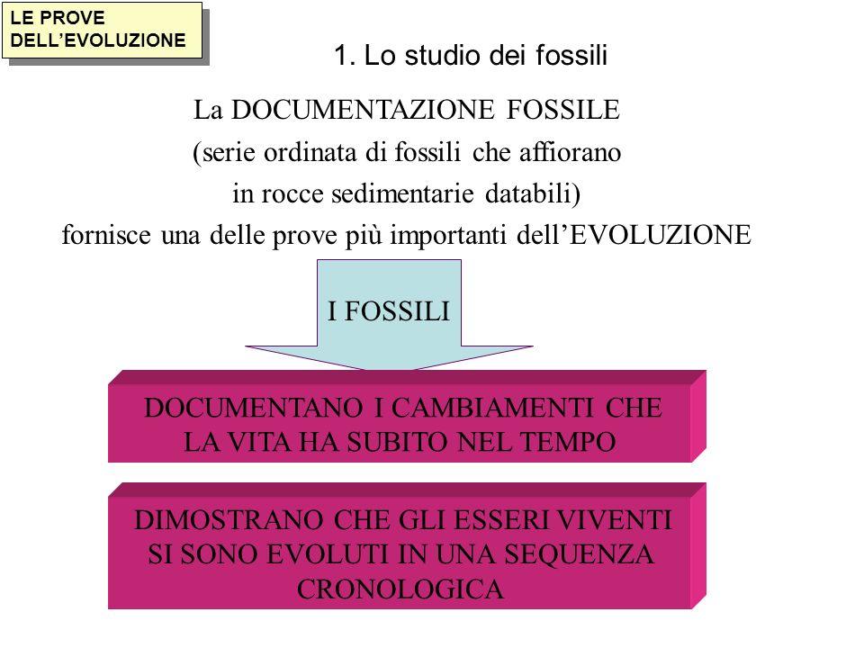 La DOCUMENTAZIONE FOSSILE (serie ordinata di fossili che affiorano
