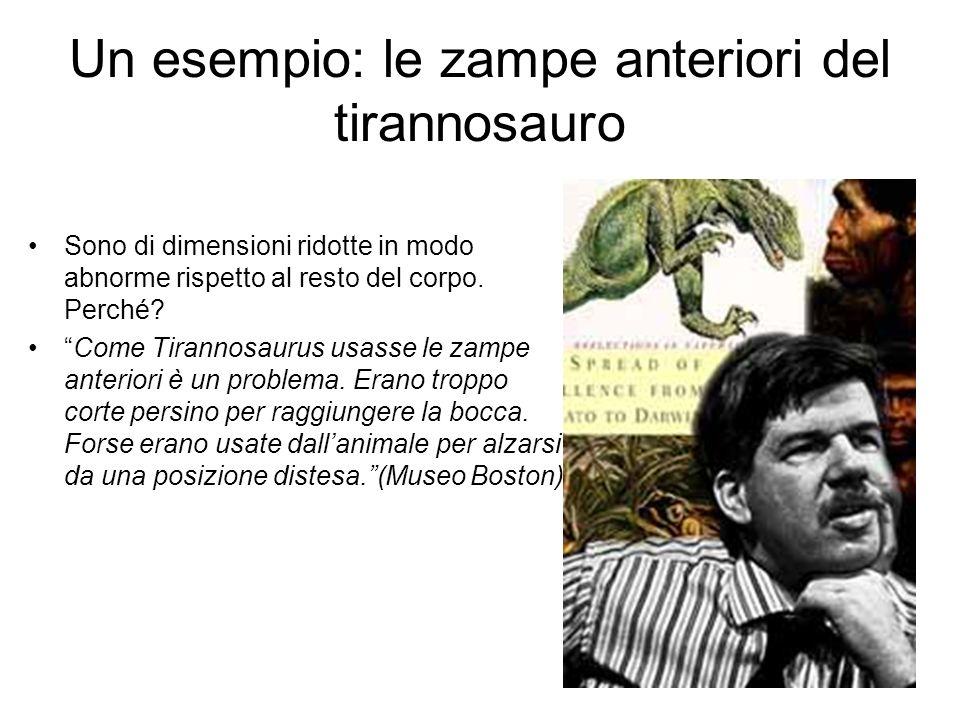 Un esempio: le zampe anteriori del tirannosauro