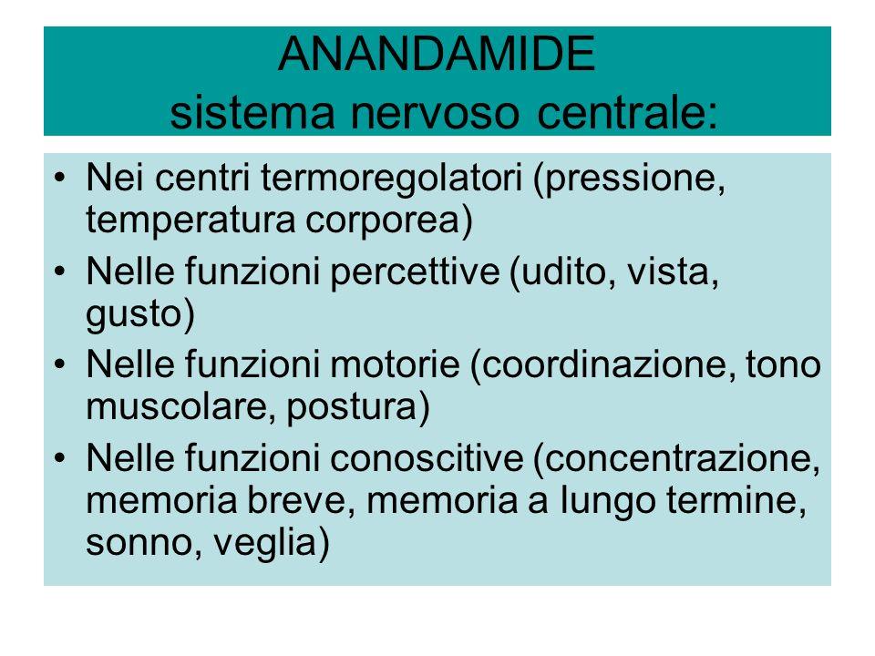 ANANDAMIDE sistema nervoso centrale: