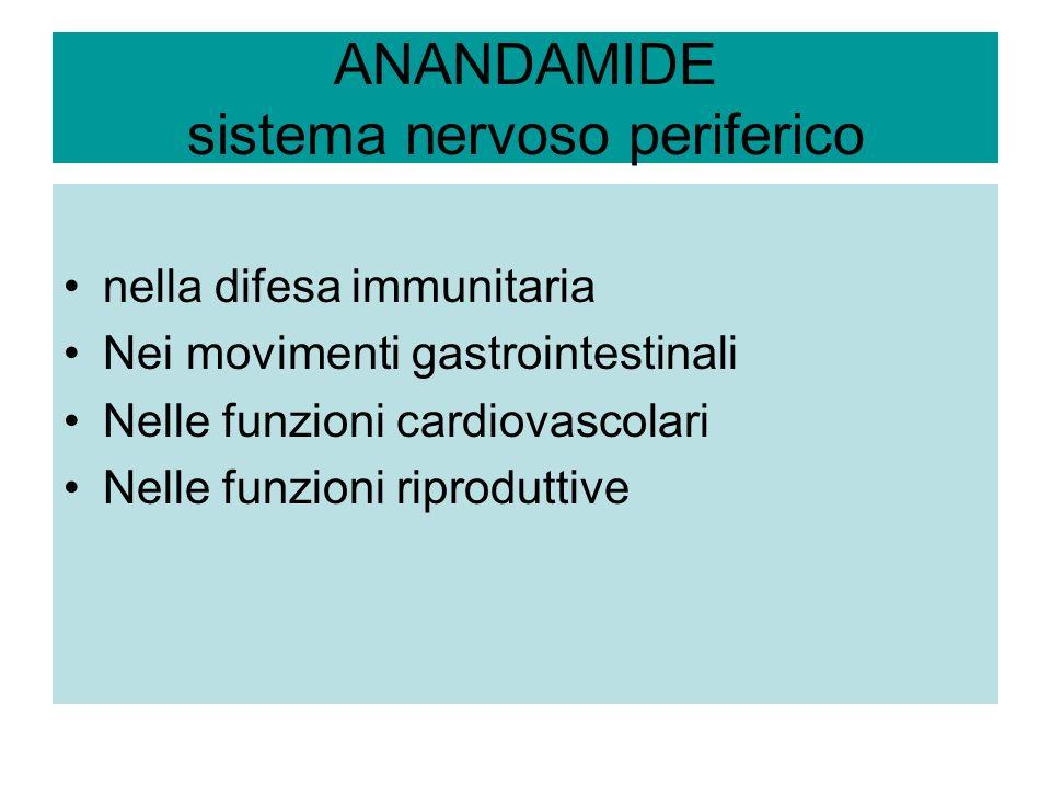 ANANDAMIDE sistema nervoso periferico