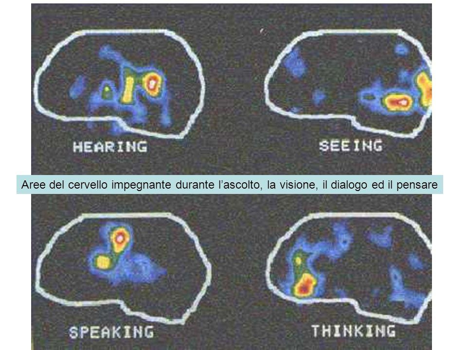 Aree del cervello impegnante durante l'ascolto, la visione, il dialogo ed il pensare