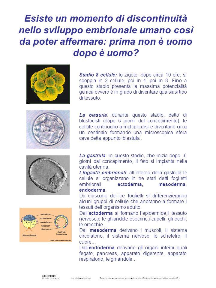 Esiste un momento di discontinuità nello sviluppo embrionale umano così da poter affermare: prima non è uomo dopo è uomo
