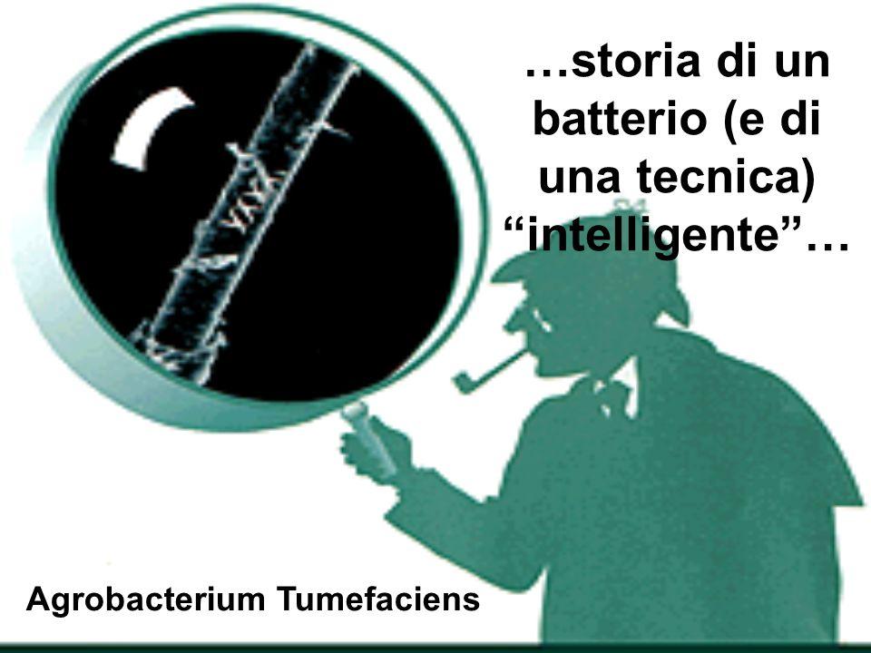 …storia di un batterio (e di una tecnica) intelligente …