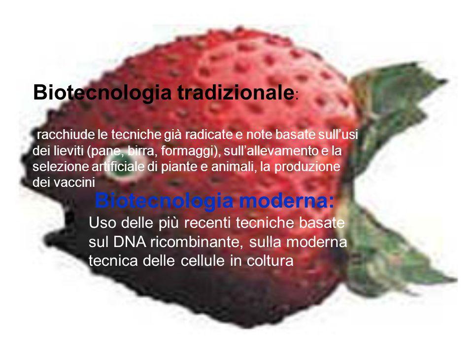 Biotecnologia tradizionale: