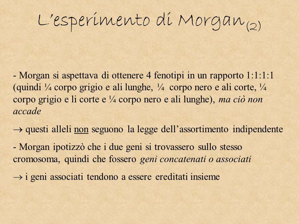L'esperimento di Morgan(2)