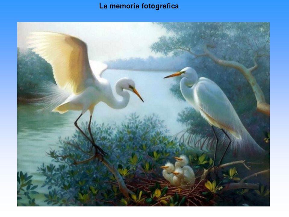 La memoria fotografica