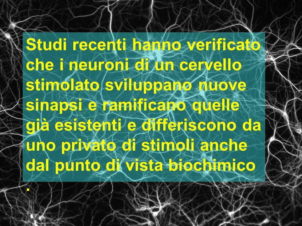 Studi recenti hanno verificato che i neuroni di un cervello stimolato sviluppano nuove sinapsi e ramificano quelle già esistenti e differiscono da uno privato di stimoli anche dal punto di vista biochimico .